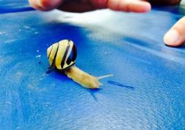 Oxbow-Snail-Club-1